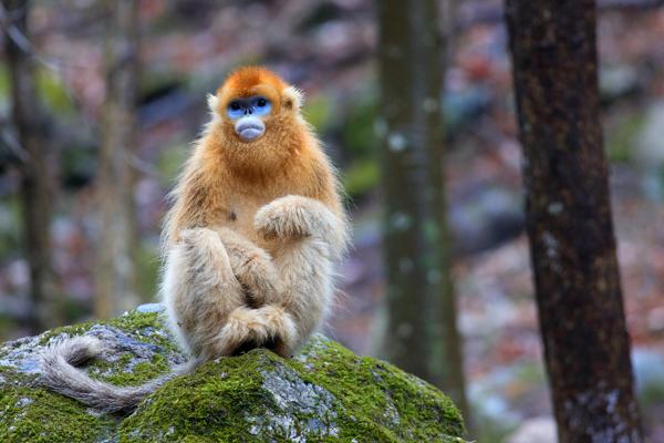 金丝猴3.jpg