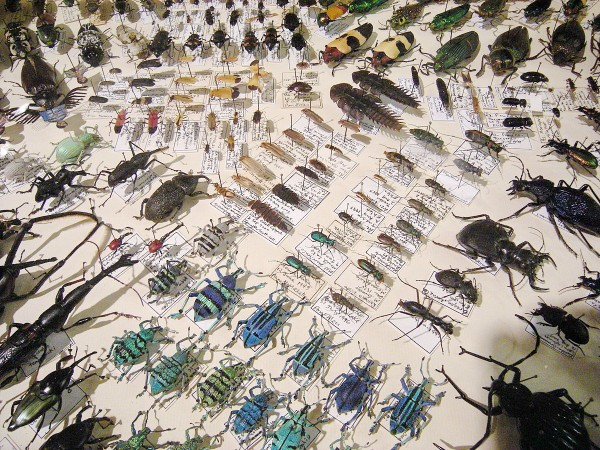 1200px-Insect_Safari_-_insect_27.jpg