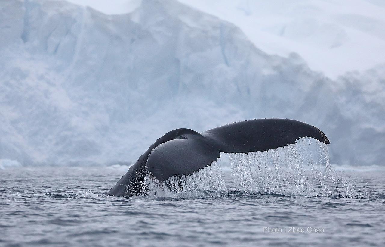 _84A7830 座头鲸.jpg