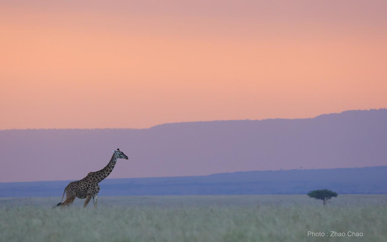 线路景色,草原日落。摄影:赵超.jpg