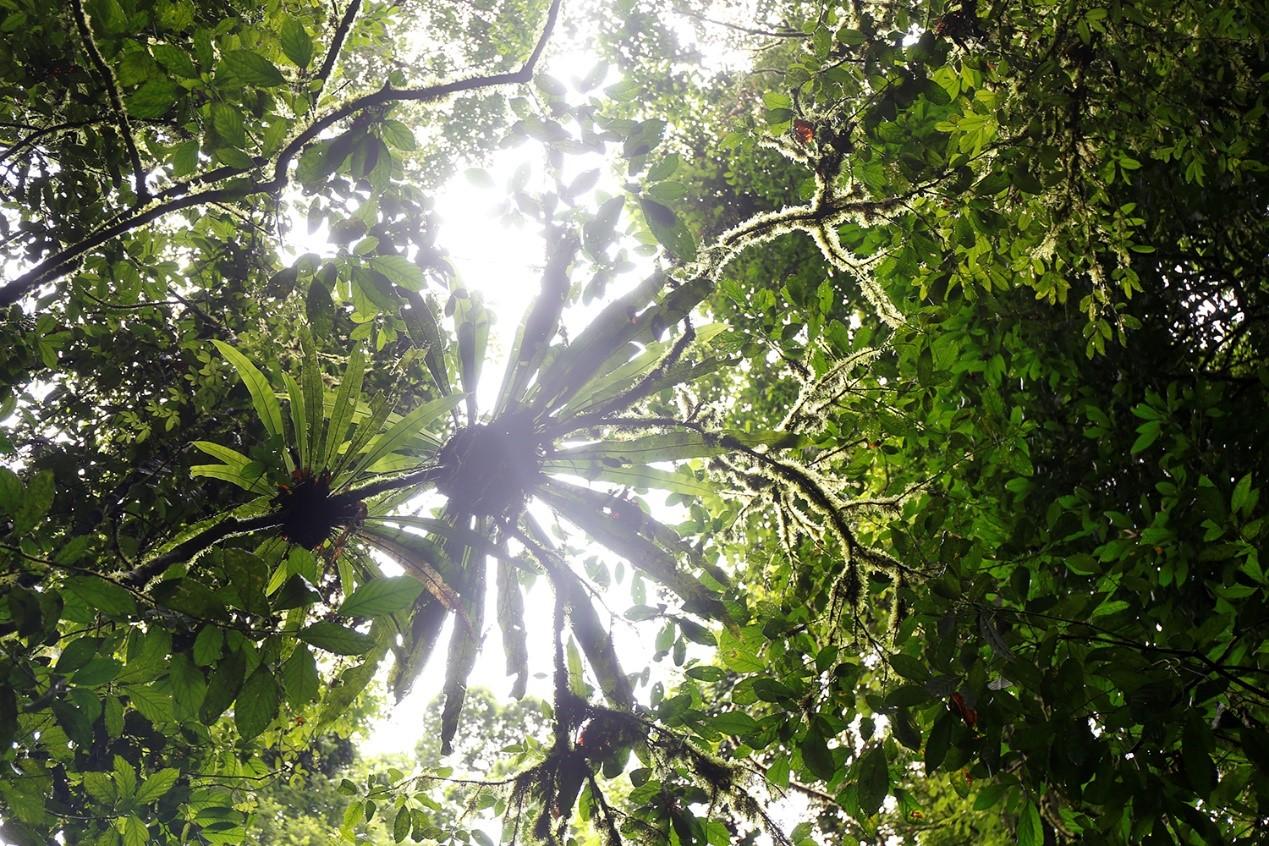 2.版纳雨林。李可莱摄.jpg