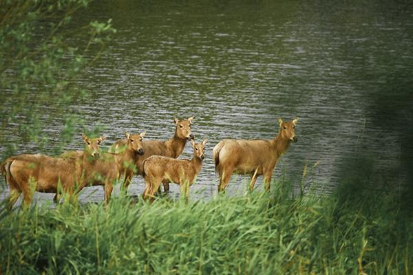 图18-麋鹿-摄影:李永浩.png